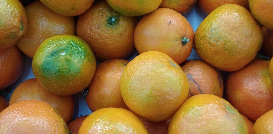 Clementina: qualità terapeutiche