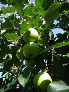 ftutto mela