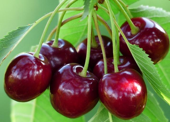 frutti cliegie