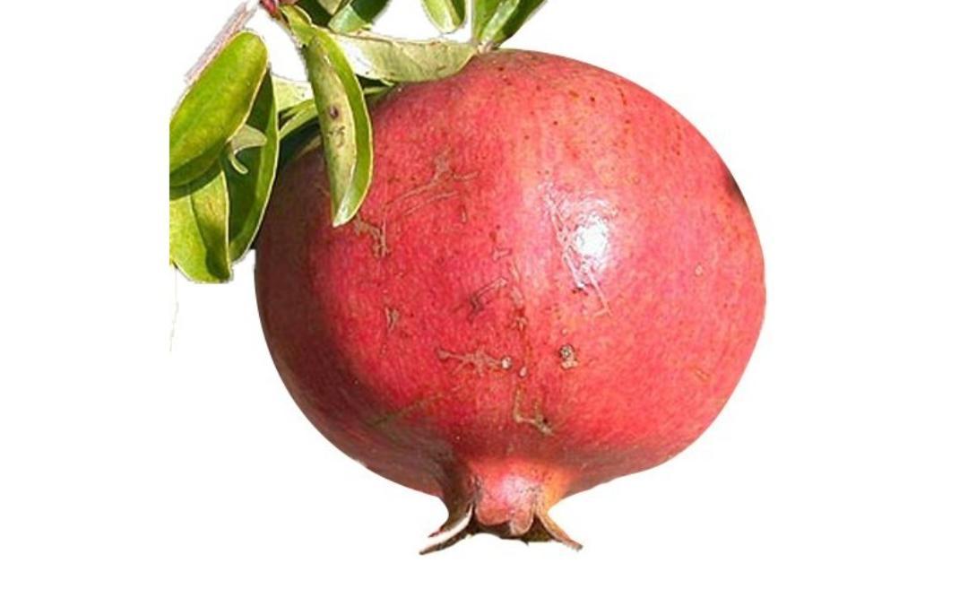 frutto di melograno