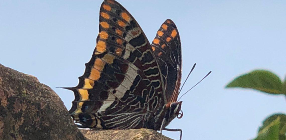 farfalla e trasformazione