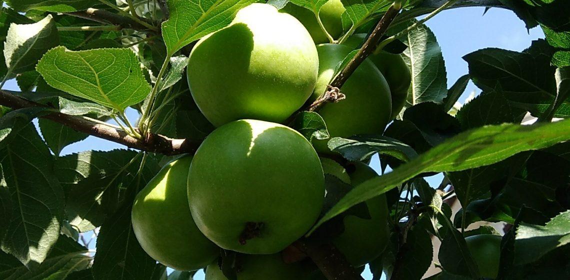 frutto fiore seme particella origine