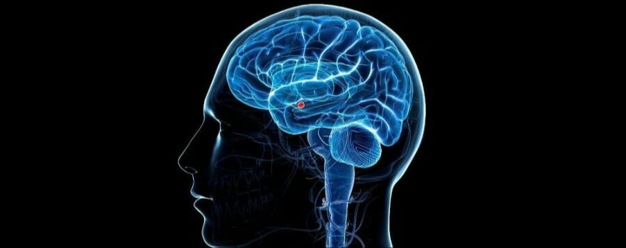 cervello e le entità parlanti