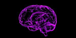 immagine forma cervello umano
